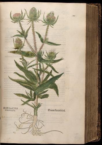 Image of Fuchs-1542-225