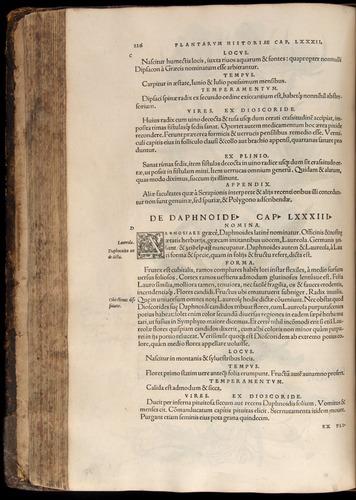 Image of Fuchs-1542-226