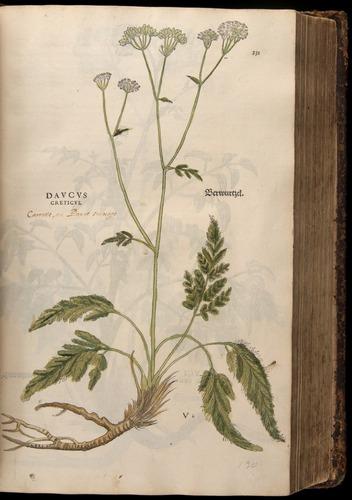 Image of Fuchs-1542-231