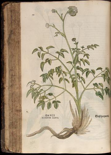 Image of Fuchs-1542-232