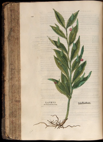 Image of Fuchs-1542-238