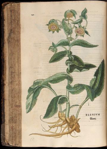 Image of Fuchs-1542-242