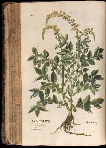 Image of Fuchs-1542-244