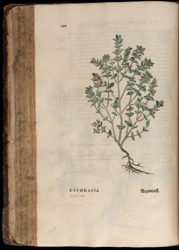 Image of Fuchs-1542-246