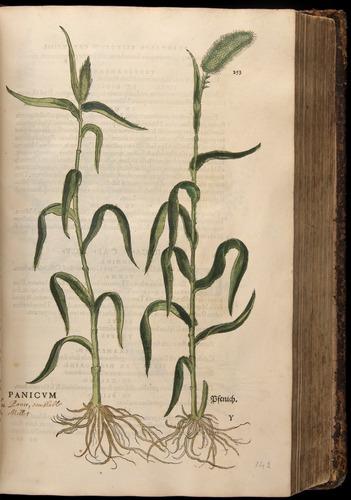 Image of Fuchs-1542-253