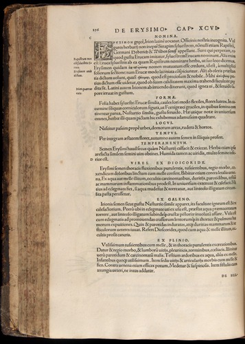Image of Fuchs-1542-256