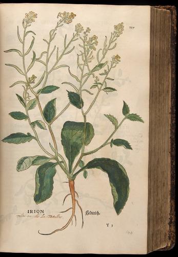 Image of Fuchs-1542-257