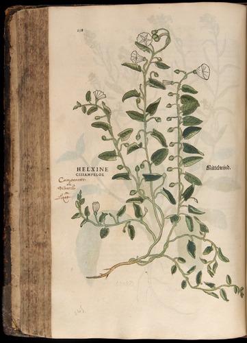 Image of Fuchs-1542-258