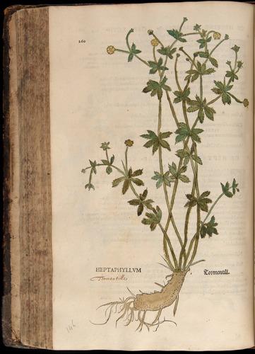 Image of Fuchs-1542-260