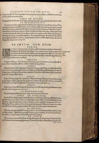 Image of Fuchs-1542-261