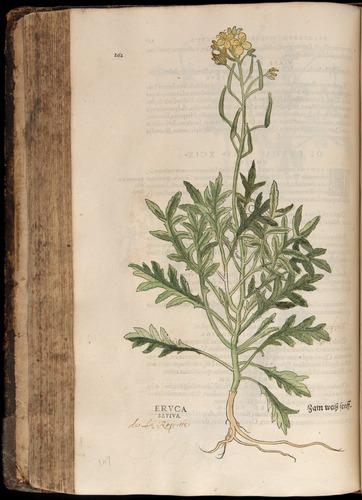 Image of Fuchs-1542-262