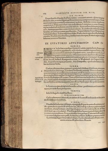 Image of Fuchs-1542-264