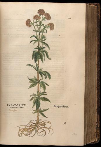 Image of Fuchs-1542-265