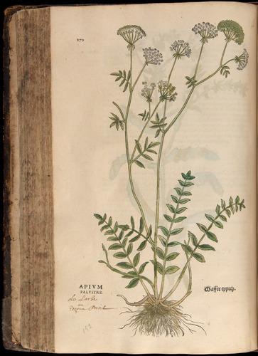 Image of Fuchs-1542-270