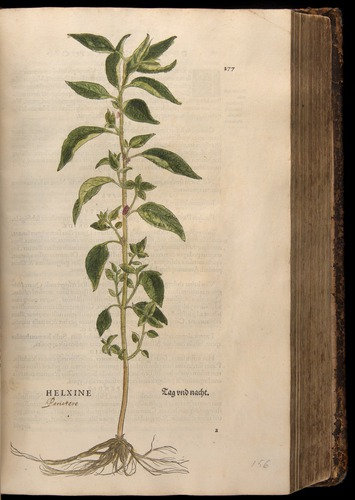 Image of Fuchs-1542-277
