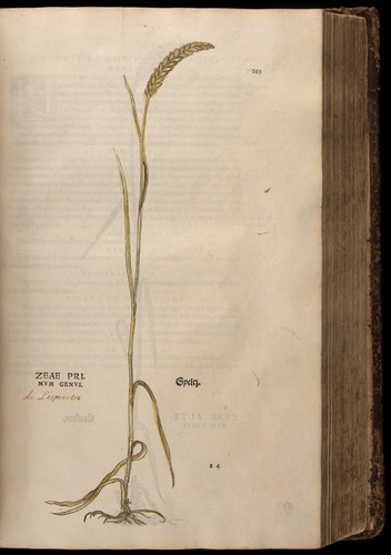 Image of Fuchs-1542-283