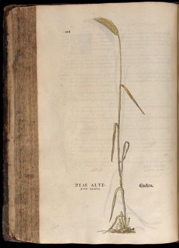 Image of Fuchs-1542-284
