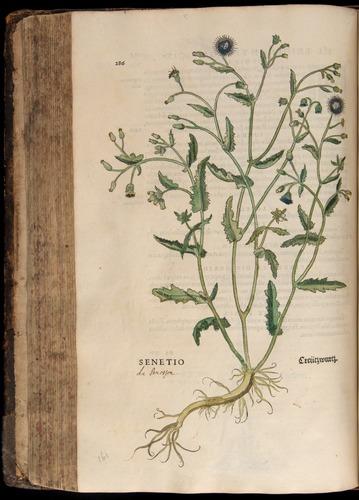 Image of Fuchs-1542-286