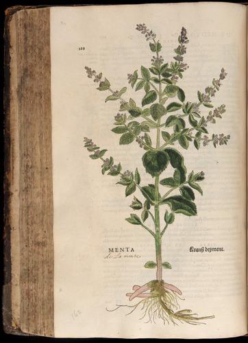 Image of Fuchs-1542-288