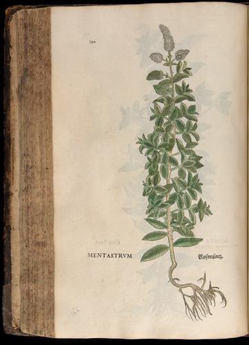 Image of Fuchs-1542-292