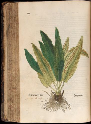 Image of Fuchs-1542-294