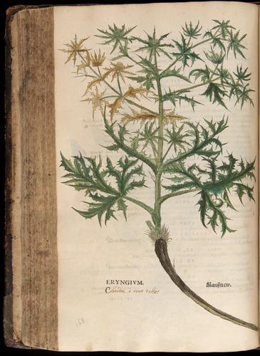 Image of Fuchs-1542-296