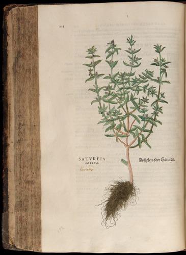 Image of Fuchs-1542-304