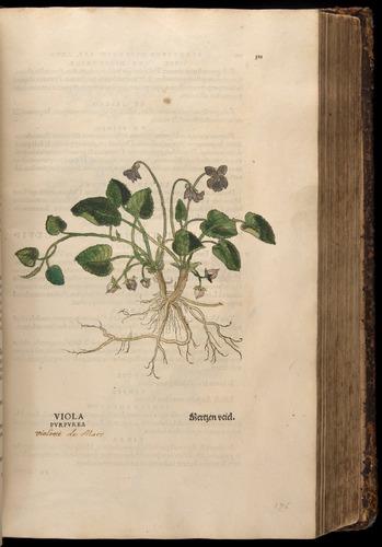 Image of Fuchs-1542-311