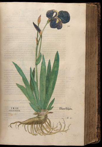 Image of Fuchs-1542-317
