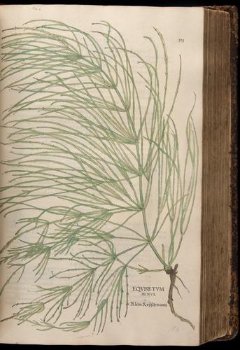 Image of Fuchs-1542-323