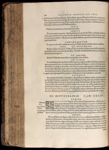 Image of Fuchs-1542-326