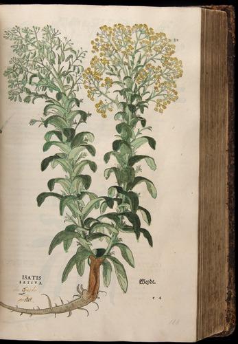 Image of Fuchs-1542-331