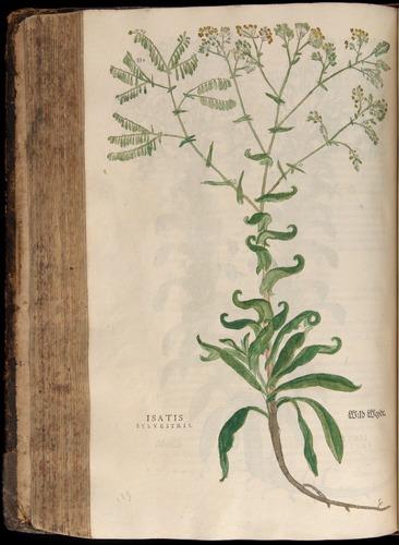 Image of Fuchs-1542-332
