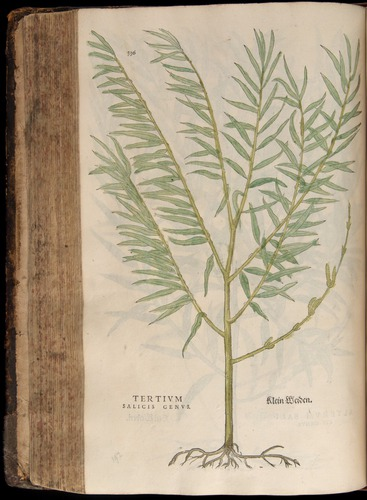 Image of Fuchs-1542-336