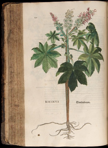 Image of Fuchs-1542-340
