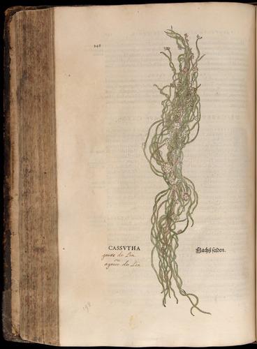 Image of Fuchs-1542-348