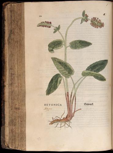 Image of Fuchs-1542-350