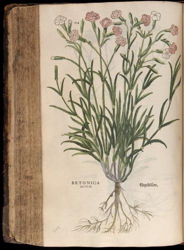 Image of Fuchs-1542-354
