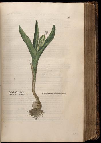 Image of Fuchs-1542-357