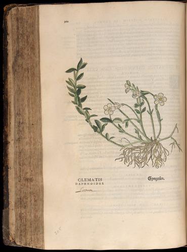 Image of Fuchs-1542-360