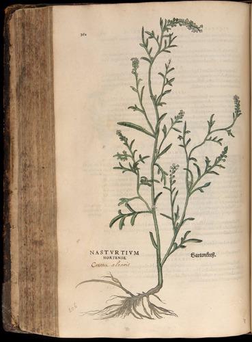 Image of Fuchs-1542-362