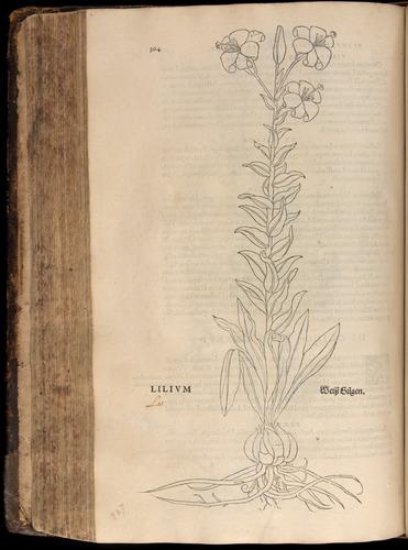 Image of Fuchs-1542-364