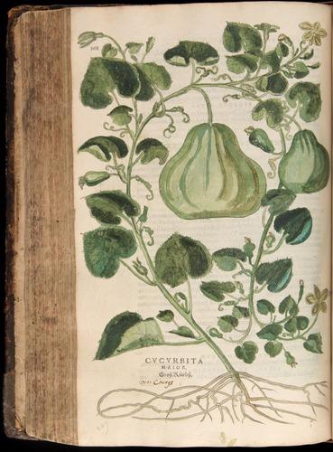 Image of Fuchs-1542-368