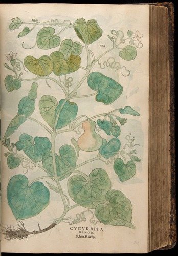 Image of Fuchs-1542-369