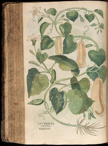 Image of Fuchs-1542-370