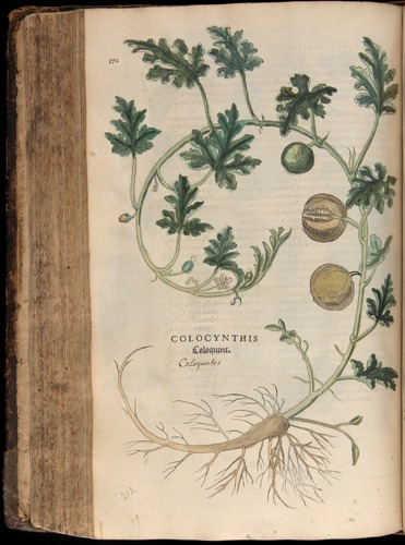Image of Fuchs-1542-372