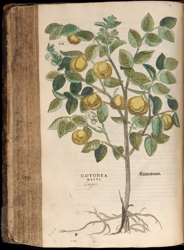 Image of Fuchs-1542-374