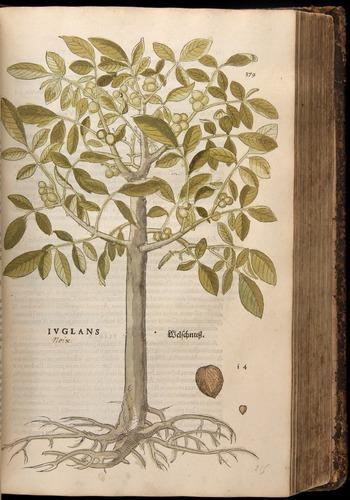 Image of Fuchs-1542-379