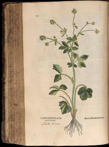 Image of Fuchs-1542-384
