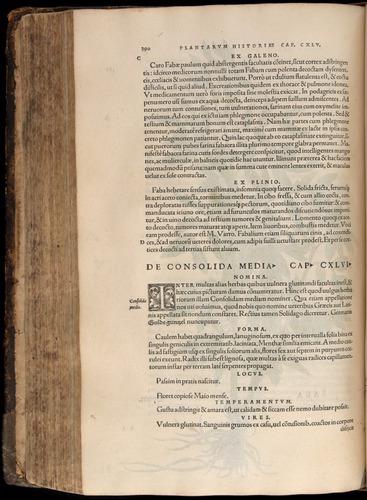 Image of Fuchs-1542-390